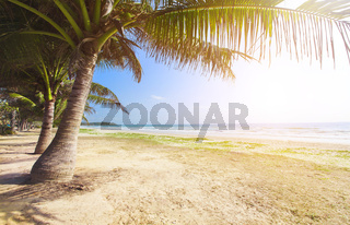 beach with coconut palm and sea at sunset time