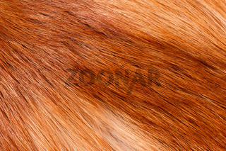 fox hairy fur texture cloth