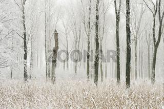 Winter im Bruchwald... Meerbusch *Nordrhein-Westfalen*