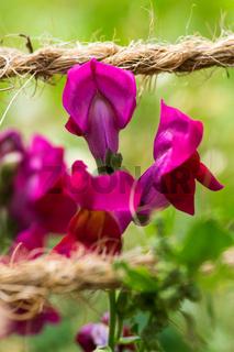 Blumen im Biogarten-3