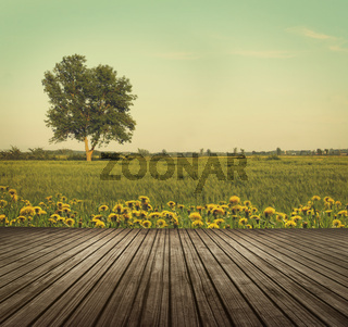 Wooden table top in open fields of dandelions