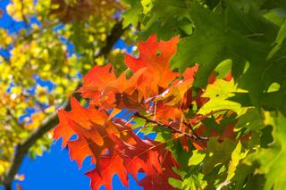 Bunter Herbst-23
