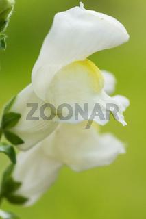 Blumen im Biogarten-2