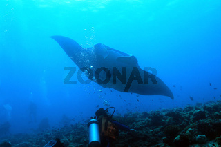 Manta Ray over Reef
