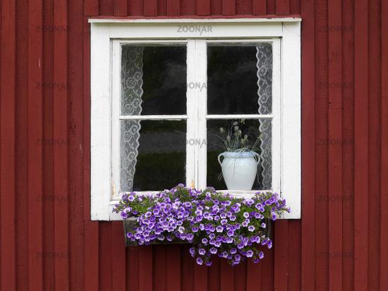 Foto Fenster Mit Blumenkasten In Schweden Bild 7165626