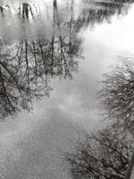 trees silhouettes are reflected in a rain puddle on pavement