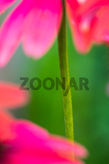 Sommer im Biogarten-23