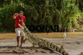 A young man feeding a crocodile in Costa Rica
