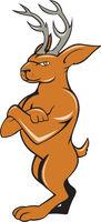 Jackalope Arms Crossed Standing Cartoon