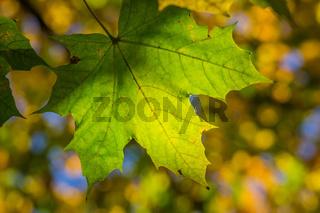 Bunter Herbst-44