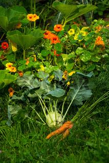 Pflanzen im Biogarten-25