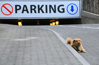 Stray Dog and Underground Parking