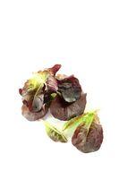 leckerer roter Salat