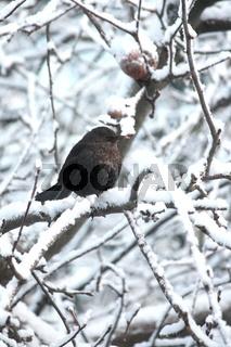Vogel auf verschneiten Zweigen