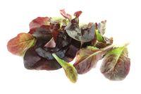 frischer roter Salat
