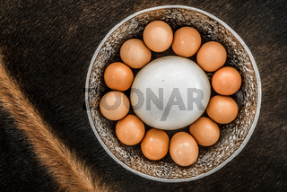 Bakers Dozen of eggs including an ostrich egg.
