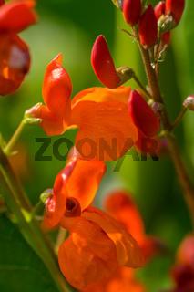 Pflanzen im Biogarten-14