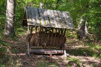 Futterkrippe am Jagdlehrweg / Burgenland