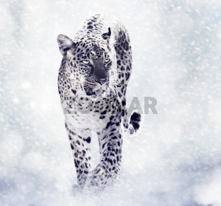 Digital Painting Of Leopard