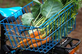 Pflanzen im Biogarten-26