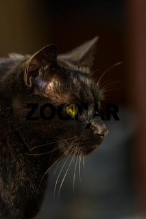 Katze Kater Augen