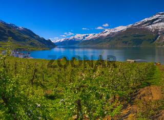 Hardangerfjord in Norway