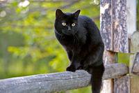 Schwarze Katze auf Holzzaun