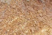 Soil background texture