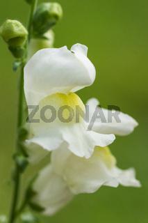 Blumen im Biogarten-4