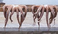 Zum Trocknen aufgehängte Tintenfische