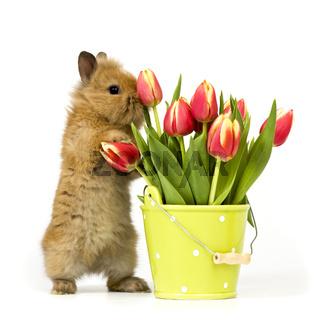 baby rabbit with tulips