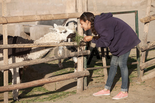 Young woman feeding lama in safari park