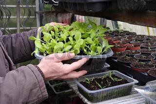 Pflanzenanzucht - plant breeding in spring