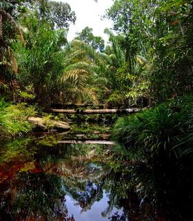Fluss im Urwald