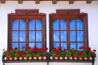 Two Windows and Flowers