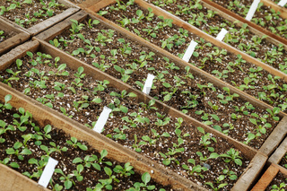 Plants ready for planting seedling in hothouse