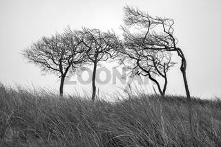 Ostsee - Duenenlandschaft am Darss