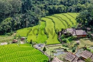 beautiful rice paddies at bali near ubud indonesia asia
