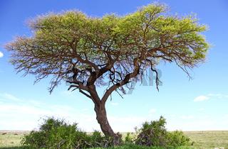 Landschaft im Etosha Nationalpark, Namibia, landscape at Etosha NP, Namibia