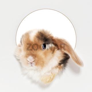 baby babbit
