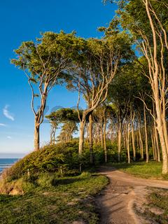 Küstenwald an der Ostseeküste