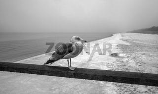 Ostsee - Einsam am Darss
