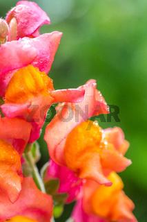 Blume im Biogarten-6