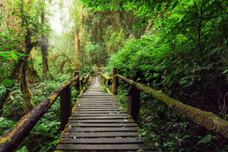 Wooden bridge at tropical forest. Doi Inthanon, Thailand