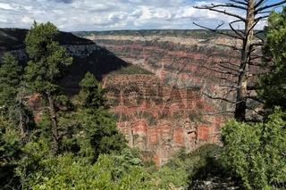 the grand canyon national park north rim arizona USA