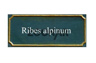 schild, Ribes alpinum, Wilde Johannisbeere,Alpenjohannisbeere,