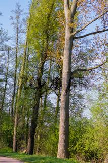 Landschaft am Dümmer See-126