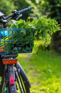 Pflanzen im Biogarten-34