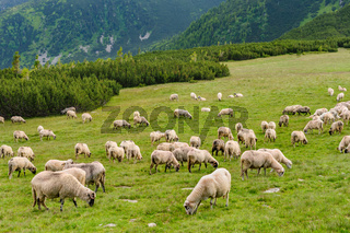 Alpine pastures in Retezat National Park, Carpathians, Romania.