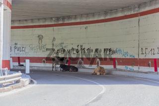 Kuh im Tunnel